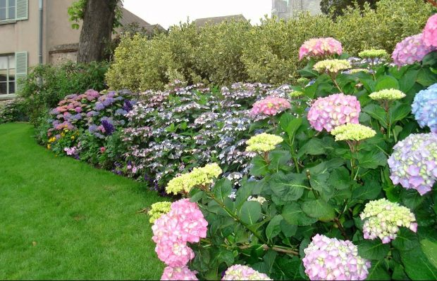 Beautiful home garden to increase the beauty of a home