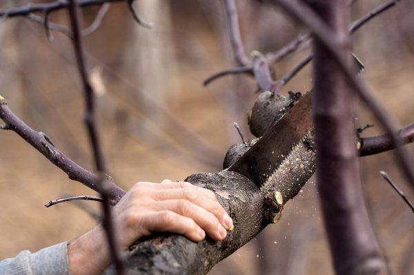 Tree removal process