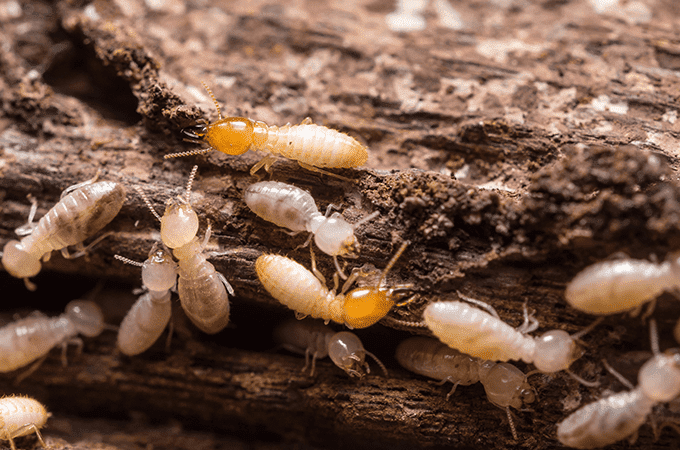 When Should I Worry About Termites?